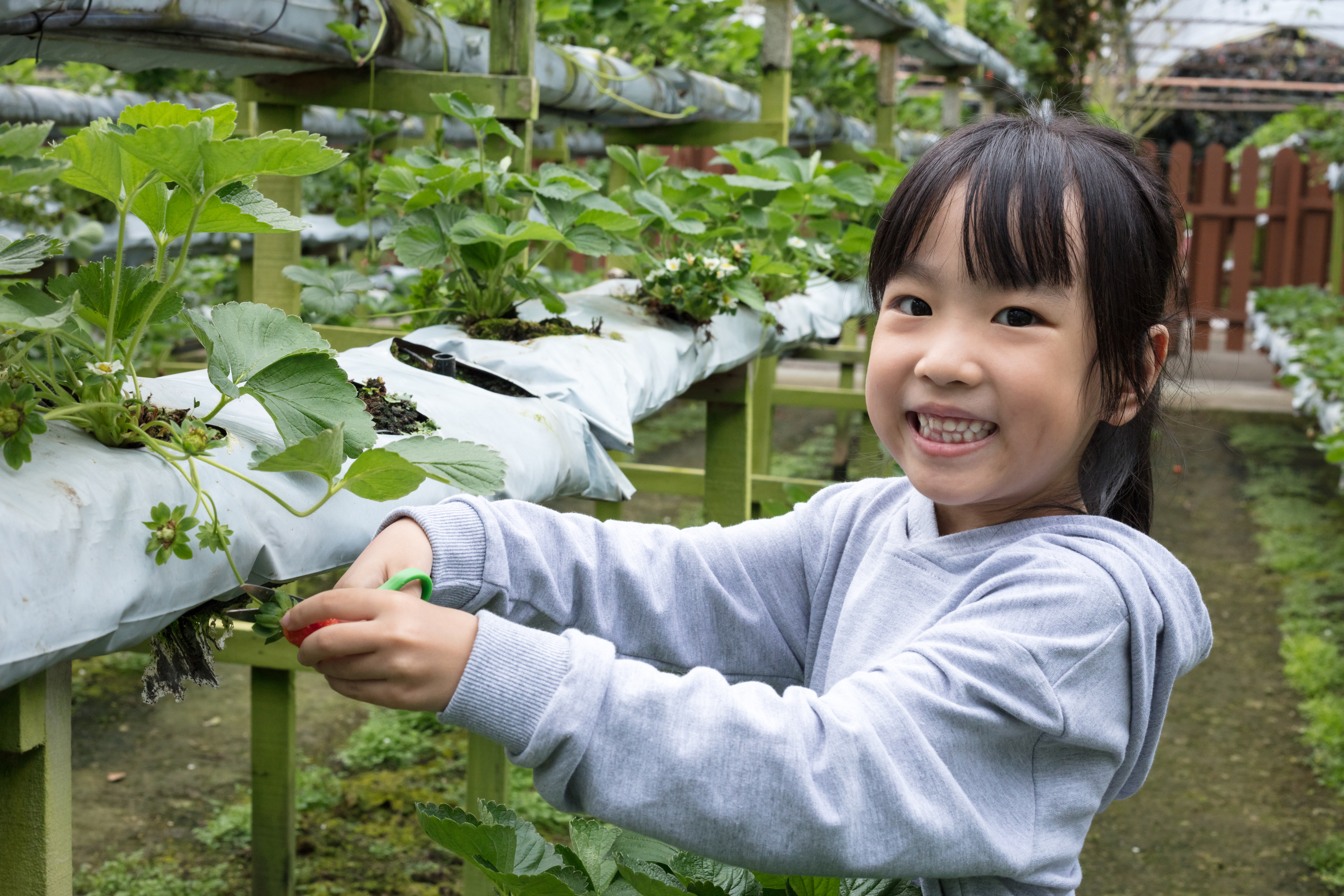 Planting a garden is a great summer activity with children